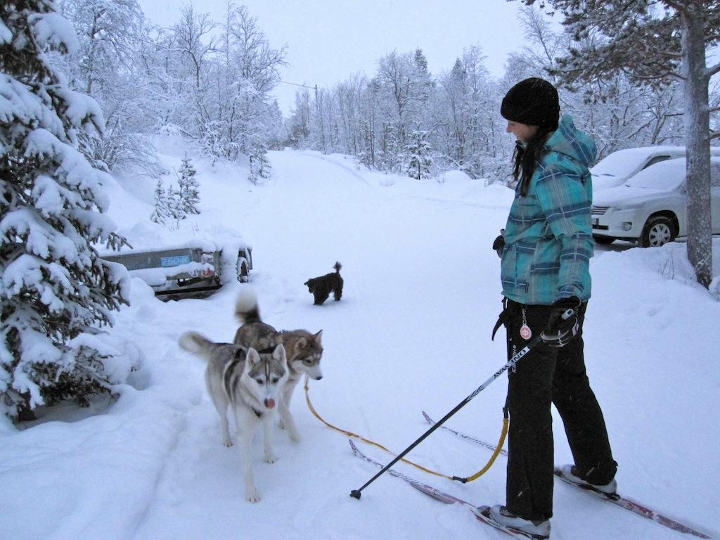 Finnisch-Lappland: Skilaufen mit Huskys