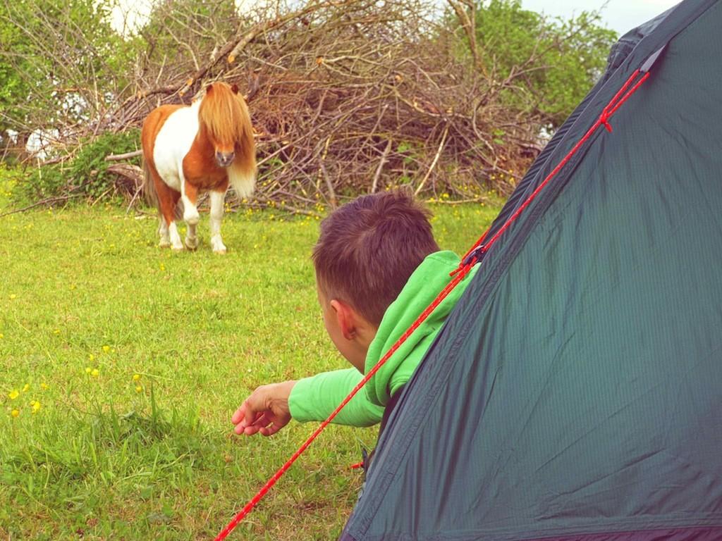 Wandern mit Pferd: Guten Morgen, Egon!