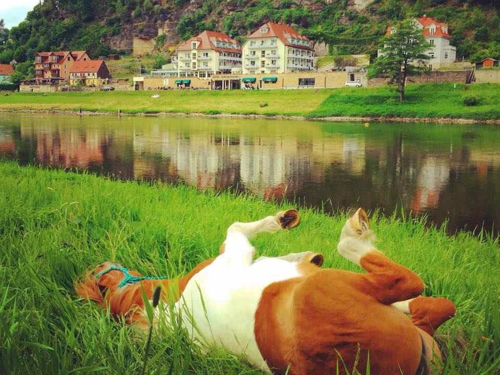 Wandern mit Pferd: Pause in der Sächsischen Schweiz