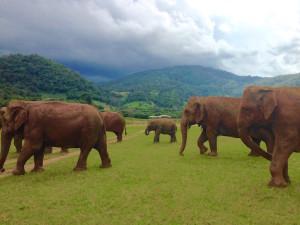 Elefanten im Elephant Nature Park, Chiang Mai, Thailand