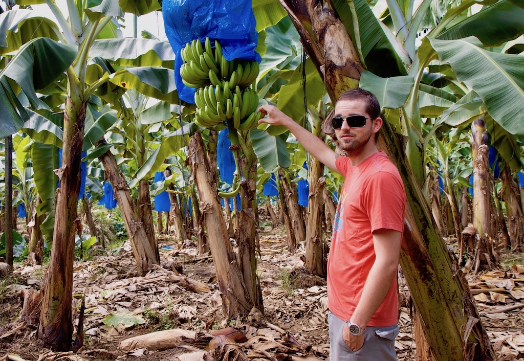 Auswandern nach Costa Rica: auf einer Bananenplantage in Limón