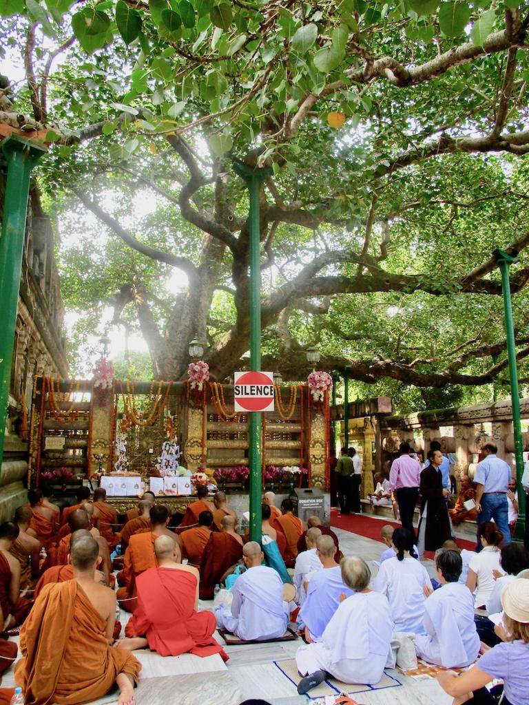 Buddhismus Indien: Mönche singen unter dem Bodhi Tree