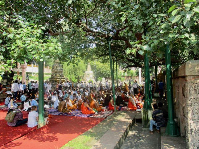Buddhismus in Indien: Besucher unter dem Bodhi Tree in Bodghaya, unter dem Buddha Erleuchtung erlangte