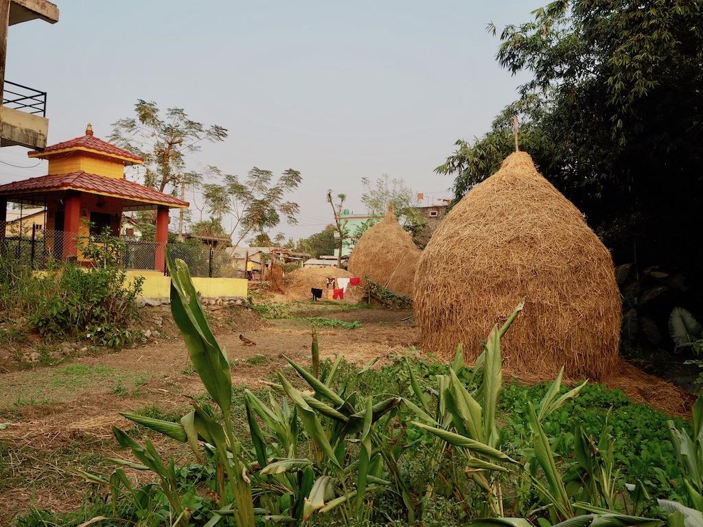 Heu im Tharu-Dorf: Als Gast im Tharu Community Homestay spaziert man durch das Dorf nahe Sauhara, Chitwan Nationalpark