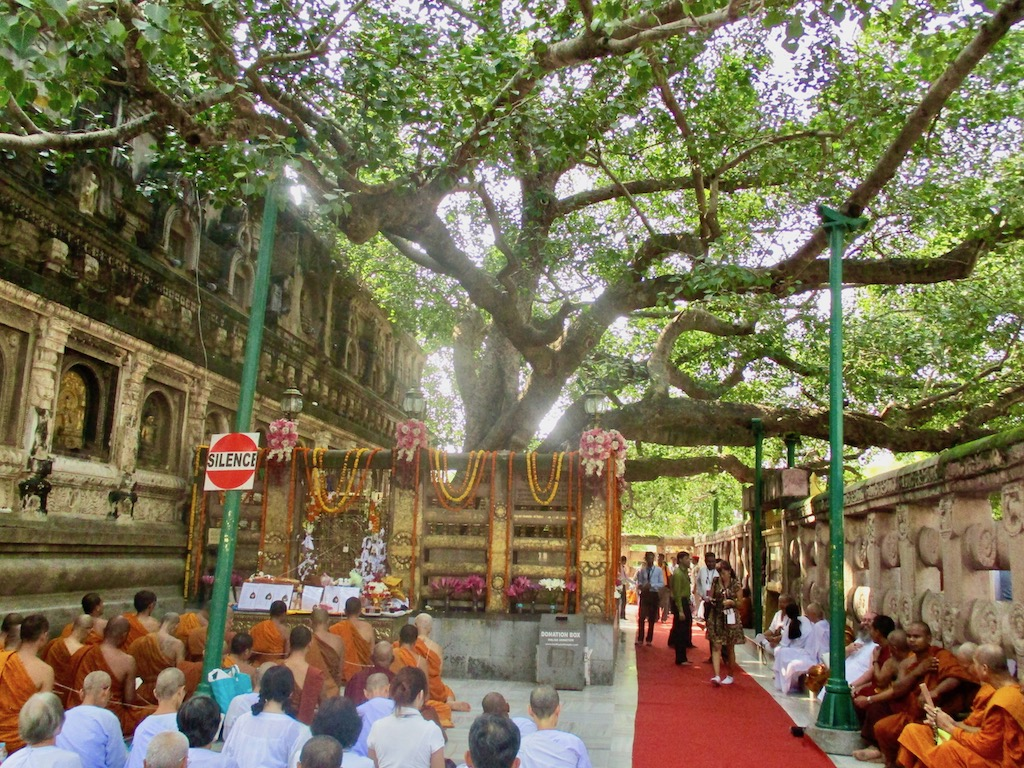 Bodhi-Baum in Bodhgaya