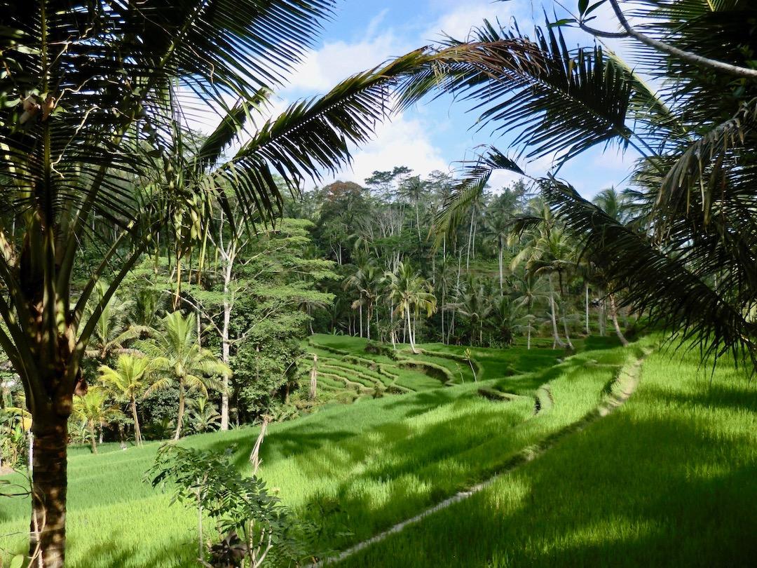 Eat Pray Love auf Bali: Auch Julia Roberts fährt durch die Reisterrassen nahe Ubud
