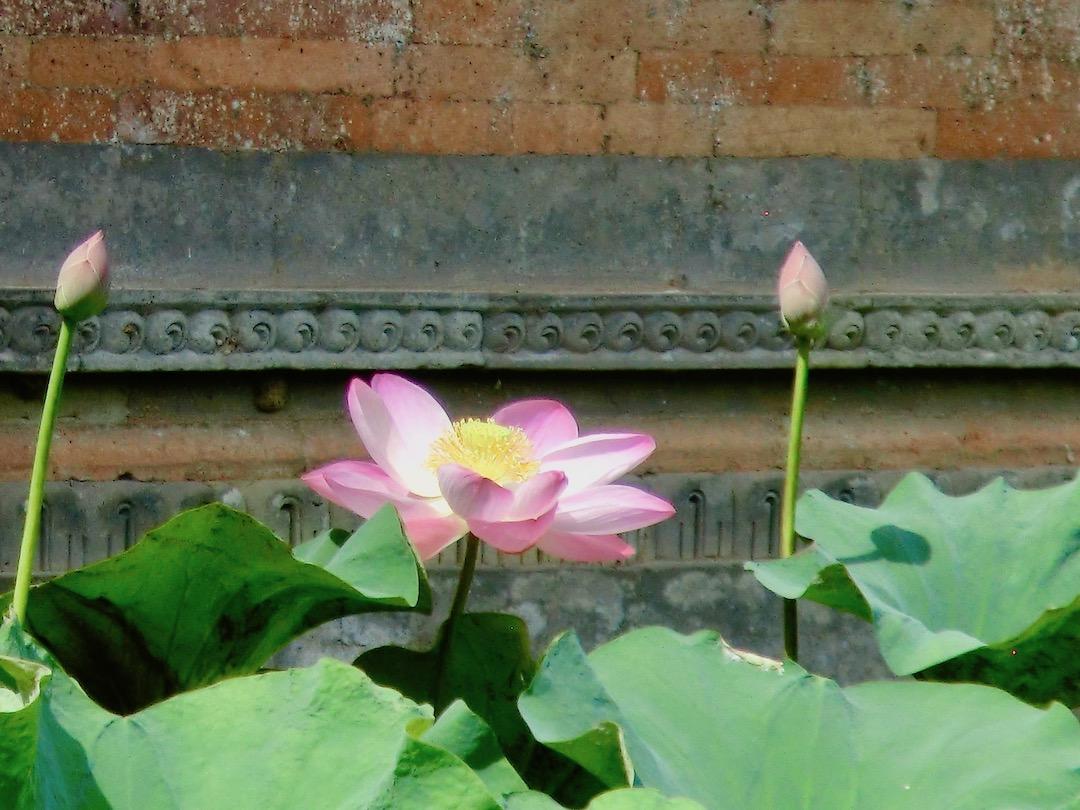 Balinesische Pflanzenwelt