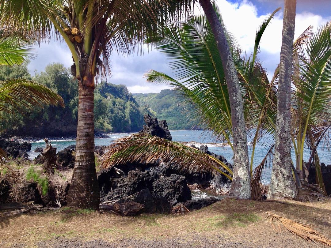 Palmen auf Maui