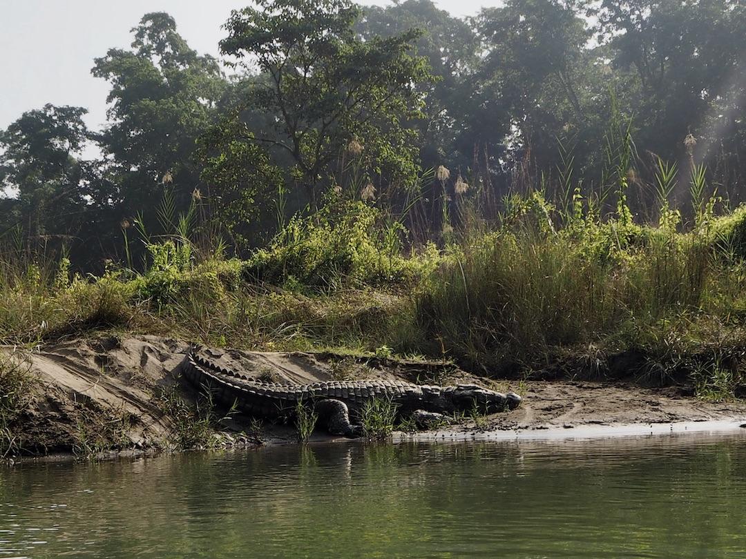 Nepal Sehenswürdigkeiten: Chitwan Nationalpark