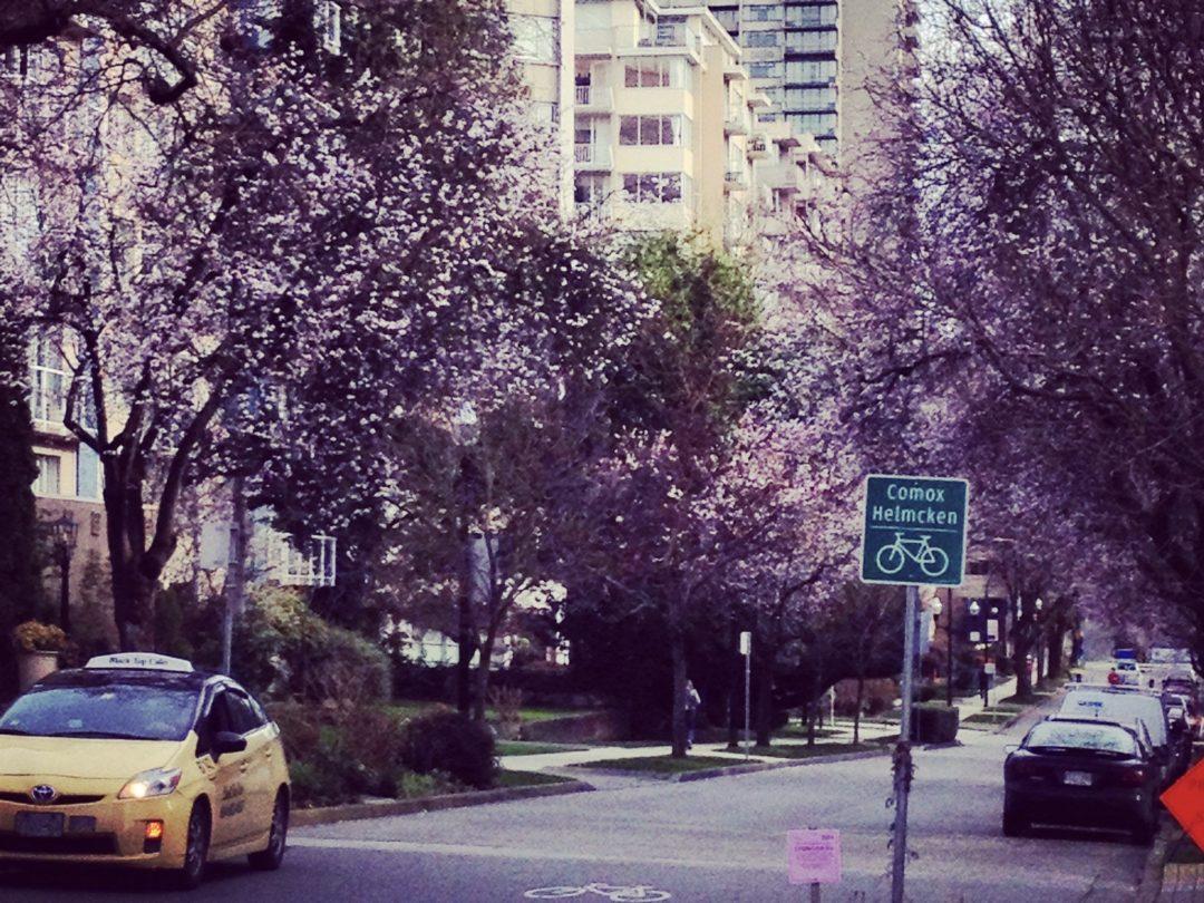 Kirschblüten in Vancouver